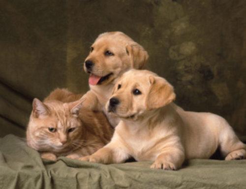 Dog Lovers VS  Cat Lovers