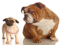 Dog Breeds known for Genetic Health problems