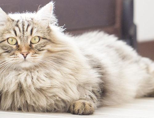 Five common pet hazards inside your doors