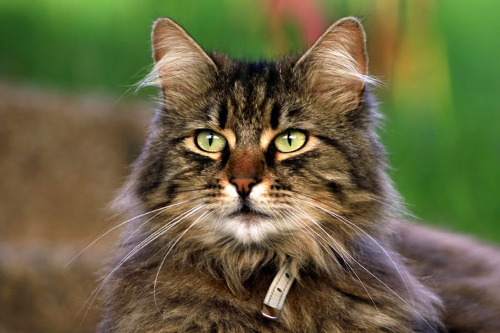 Stress causes behavioural problems in cats