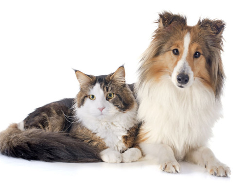 Owning a pet leads to a longer and happier life.