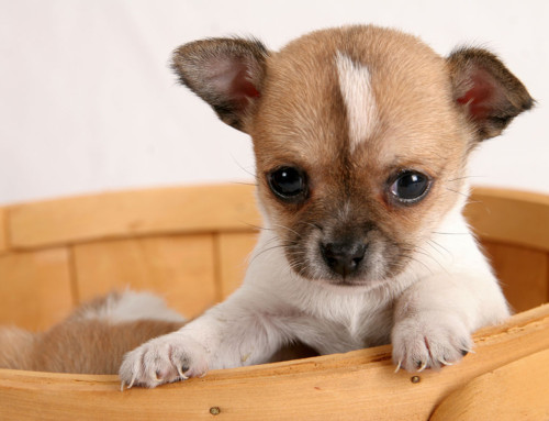 5 tips for buying and taking home a new puppy