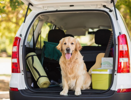 Top tips for traveling with your pet companion