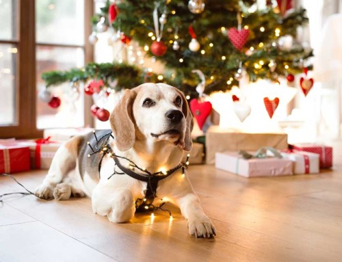 How to keep your furry friend entertained this Christmas