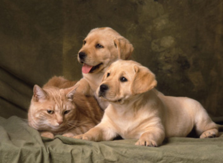 Dog Lovers VS Cat Lovers - MiPet Insurance